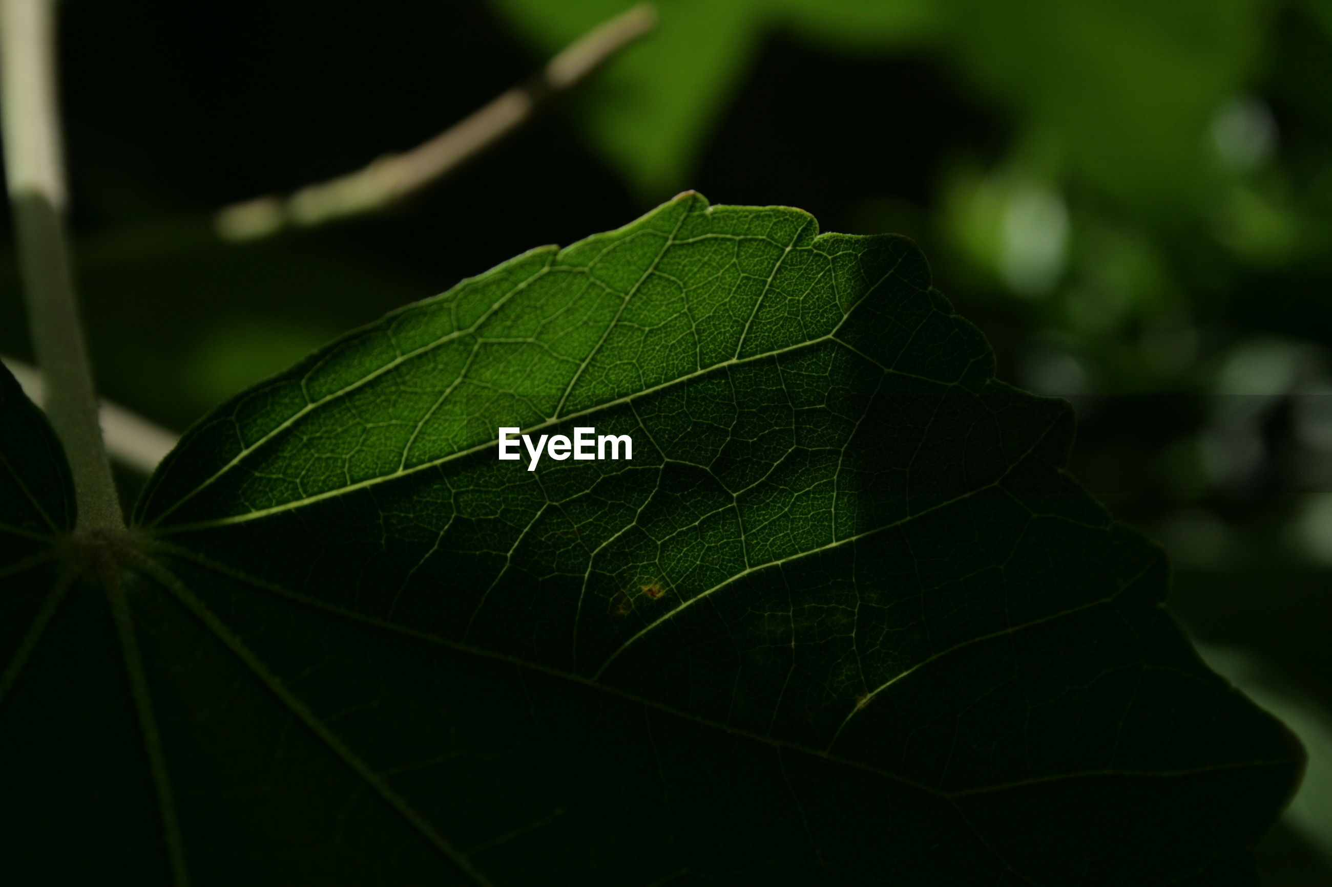 leaf, green color, close-up, growth, nature, day, focus on foreground, no people, outdoors, fragility, freshness, beauty in nature