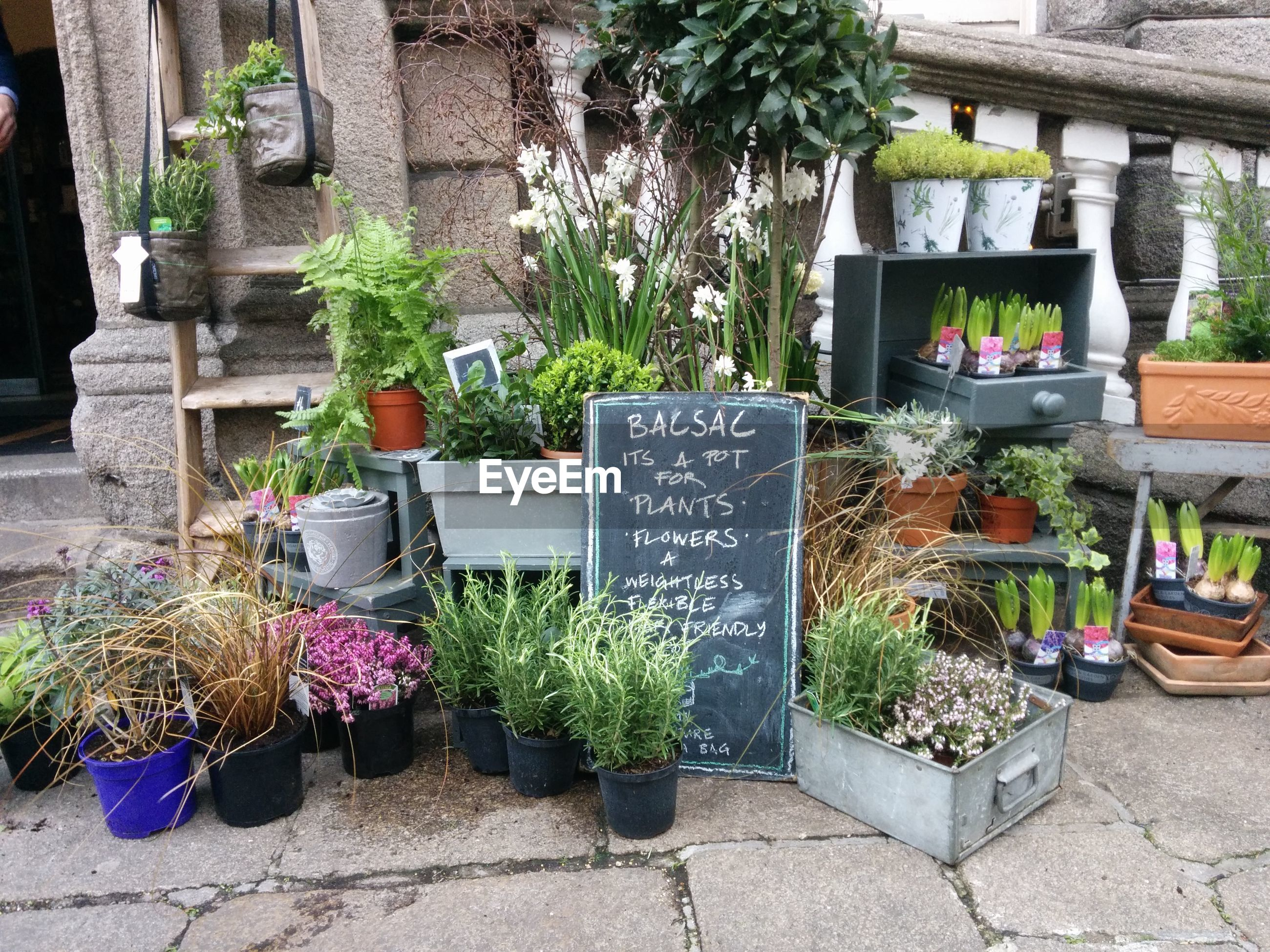 POTTED PLANTS FOR SALE AT STREET MARKET