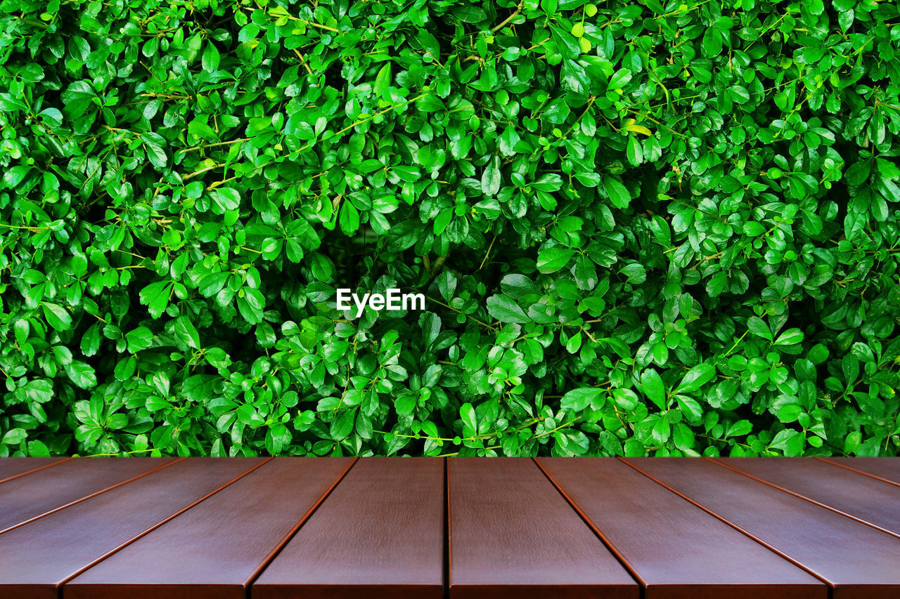 Empty wooden table space platform and nature background for product display montage.