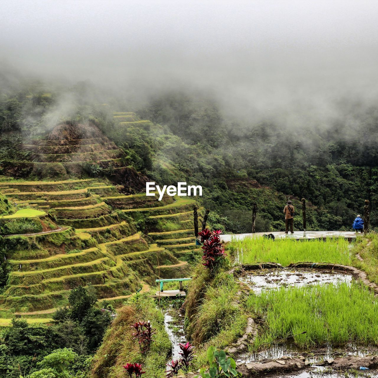 nature, growth, landscape, beauty in nature, field, agriculture, tranquility, tree, day, farm, scenics, tranquil scene, high angle view, outdoors, grass, terraced field, fog, rice paddy, rural scene, rice - cereal plant, mountain, real people, plant, men, water, sky, people