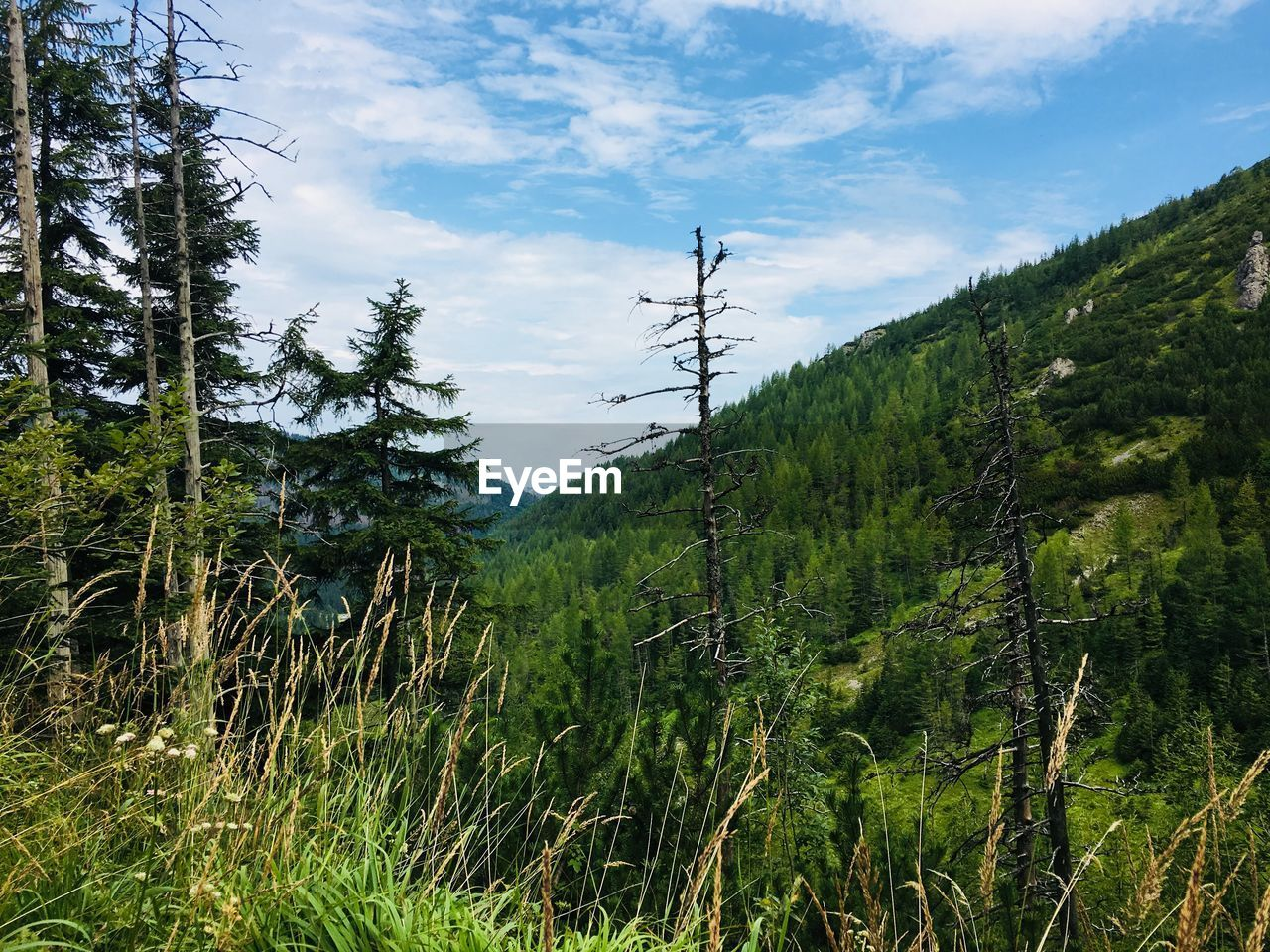 plant, tree, growth, beauty in nature, green color, sky, tranquil scene, tranquility, nature, land, forest, cloud - sky, scenics - nature, non-urban scene, day, no people, mountain, outdoors, connection, idyllic, electricity, power supply, coniferous tree