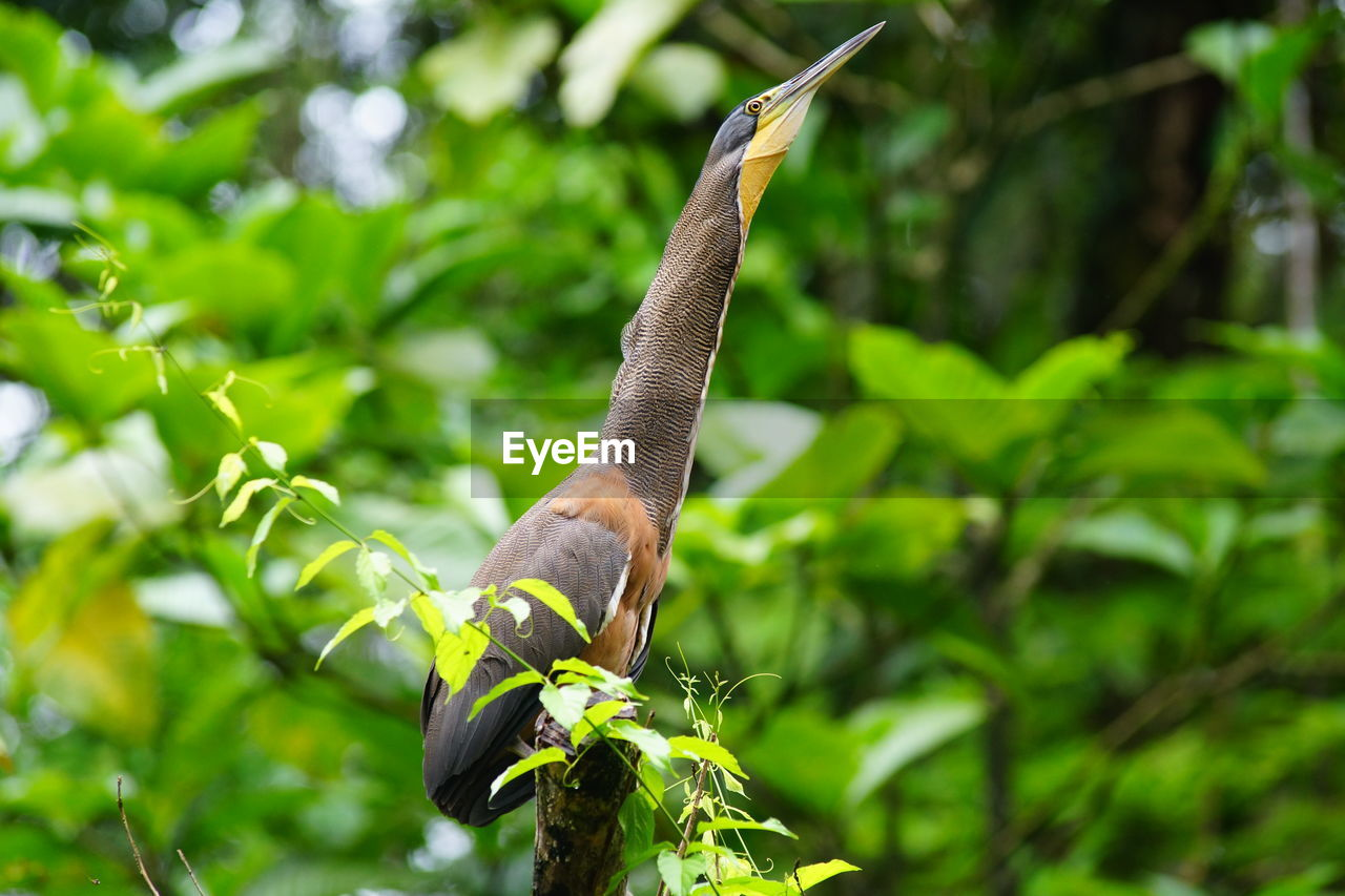 Side view of heron perching on branch
