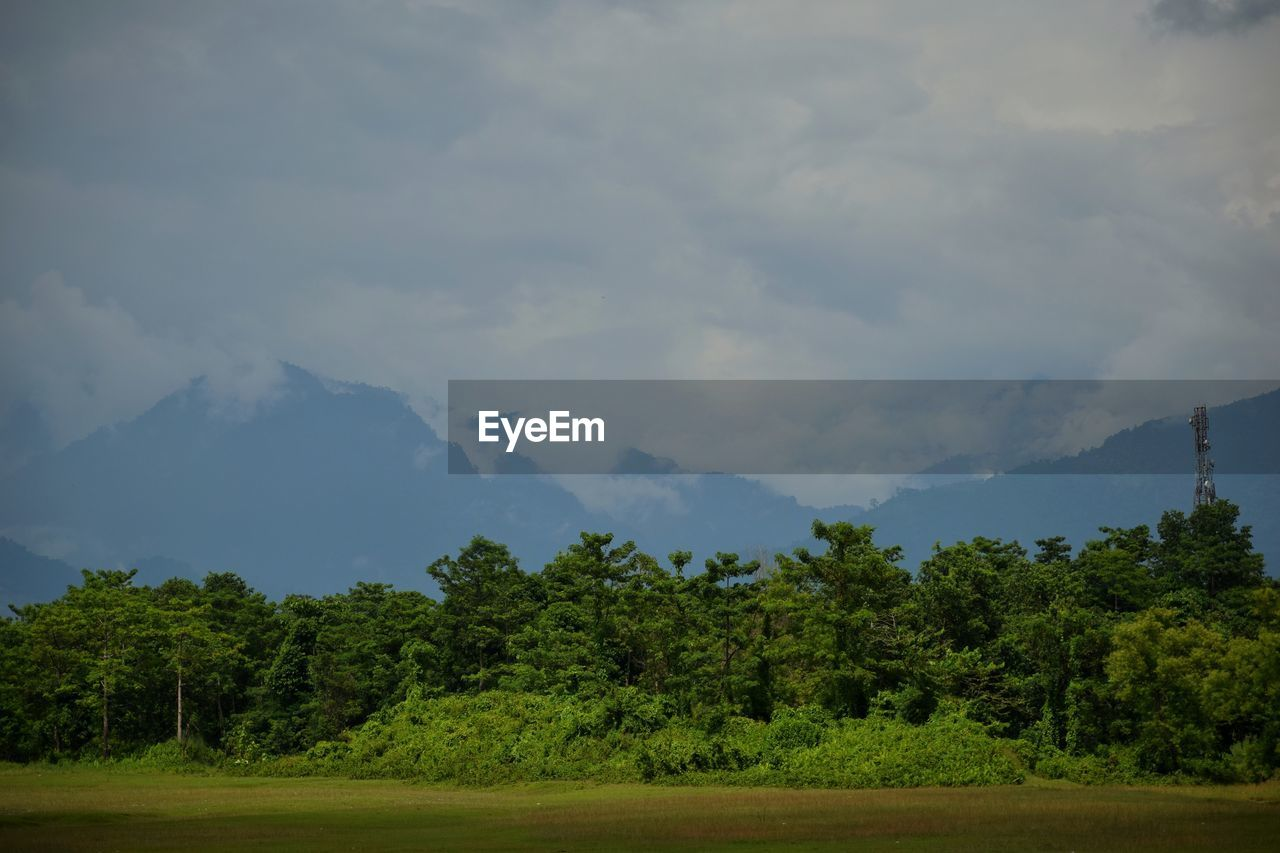 tree, plant, cloud - sky, sky, beauty in nature, scenics - nature, environment, tranquil scene, tranquility, nature, no people, green color, land, day, mountain, landscape, growth, non-urban scene, field, outdoors
