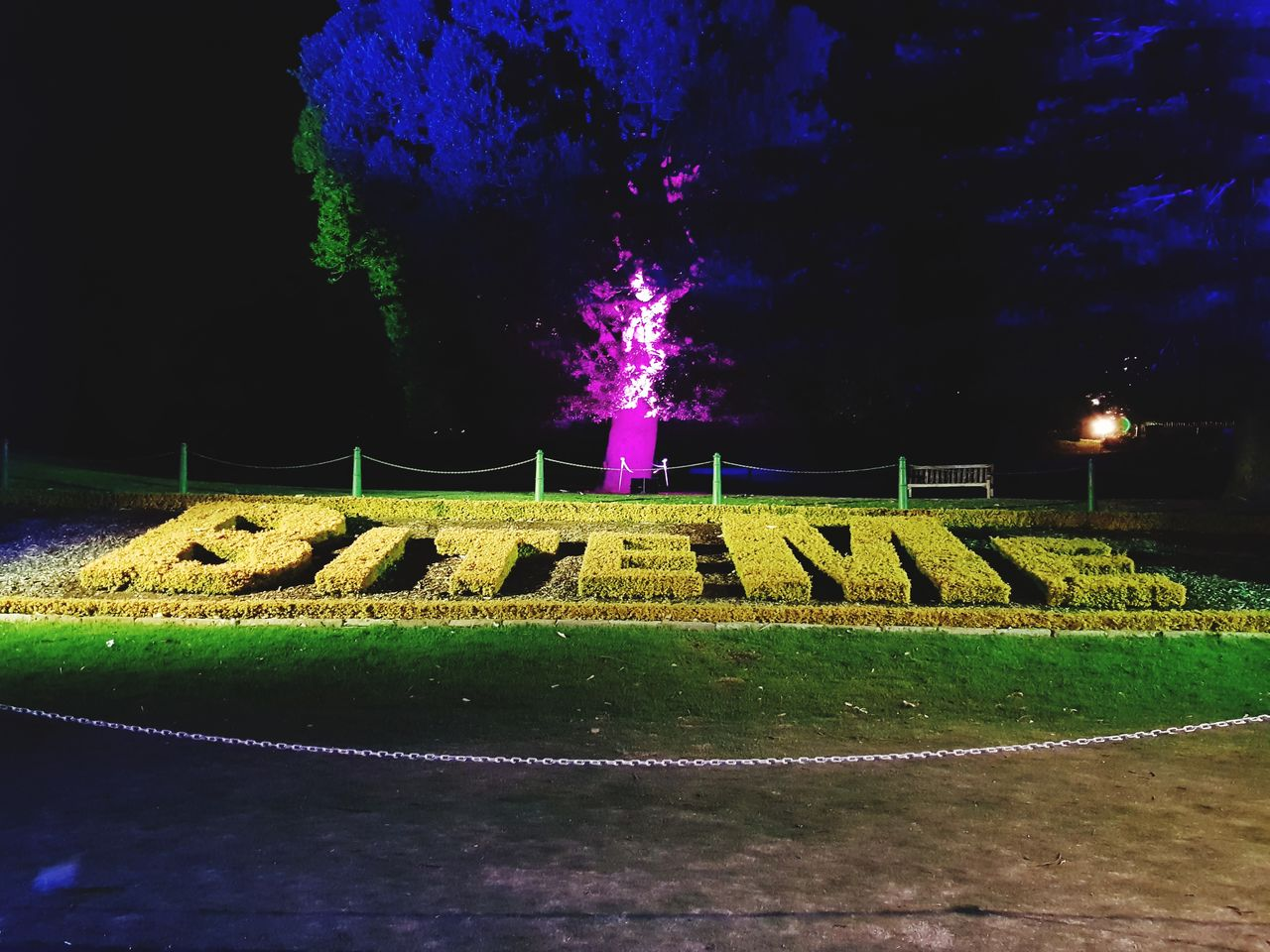 night, illuminated, plant, no people, nature, tree, communication, sky, text, outdoors, green color, sign, park, grass, motion, architecture, glowing, long exposure, creativity, park - man made space, purple