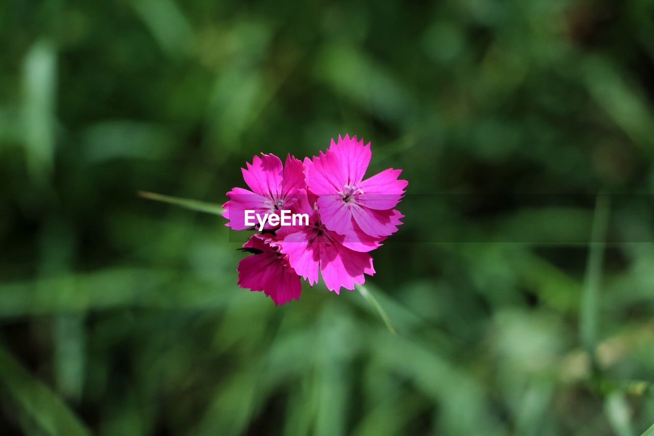 flower, nature, fragility, growth, beauty in nature, plant, petal, no people, blooming, flower head, outdoors, freshness, day, close-up