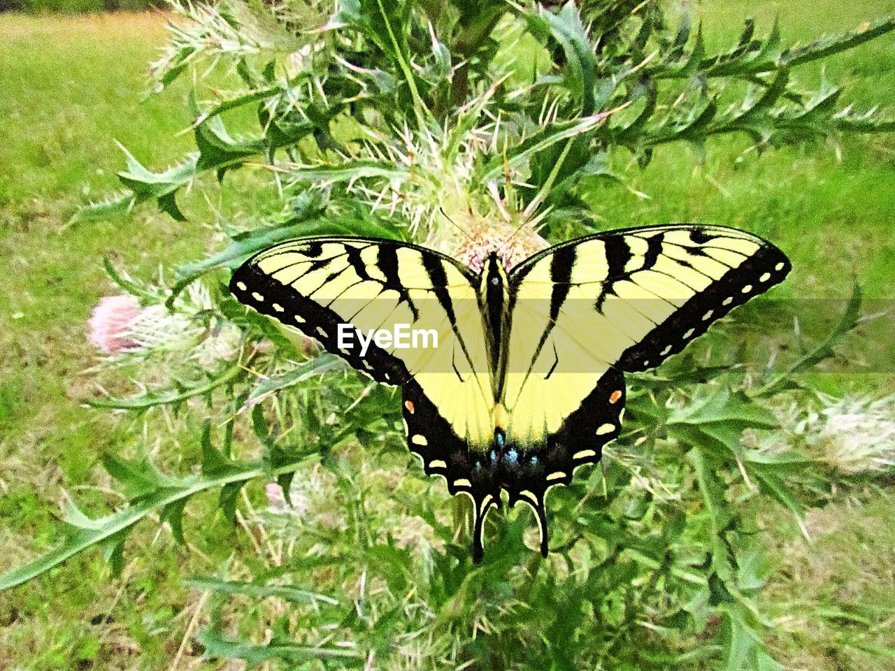 insect, animal themes, animal wing, one animal, invertebrate, animal wildlife, plant, animal, beauty in nature, animals in the wild, butterfly - insect, green color, growth, nature, plant part, leaf, close-up, flower, no people, day, outdoors, butterfly, pollination