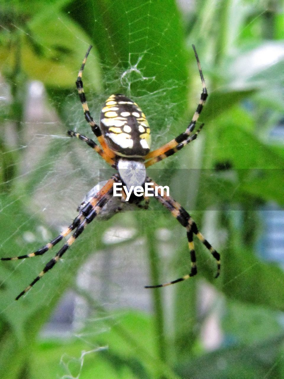 insect, arachnid, animal themes, spider, one animal, animals in the wild, invertebrate, animal, animal wildlife, arthropod, spider web, close-up, fragility, focus on foreground, animal body part, nature, animal leg, day, zoology, no people, outdoors, web