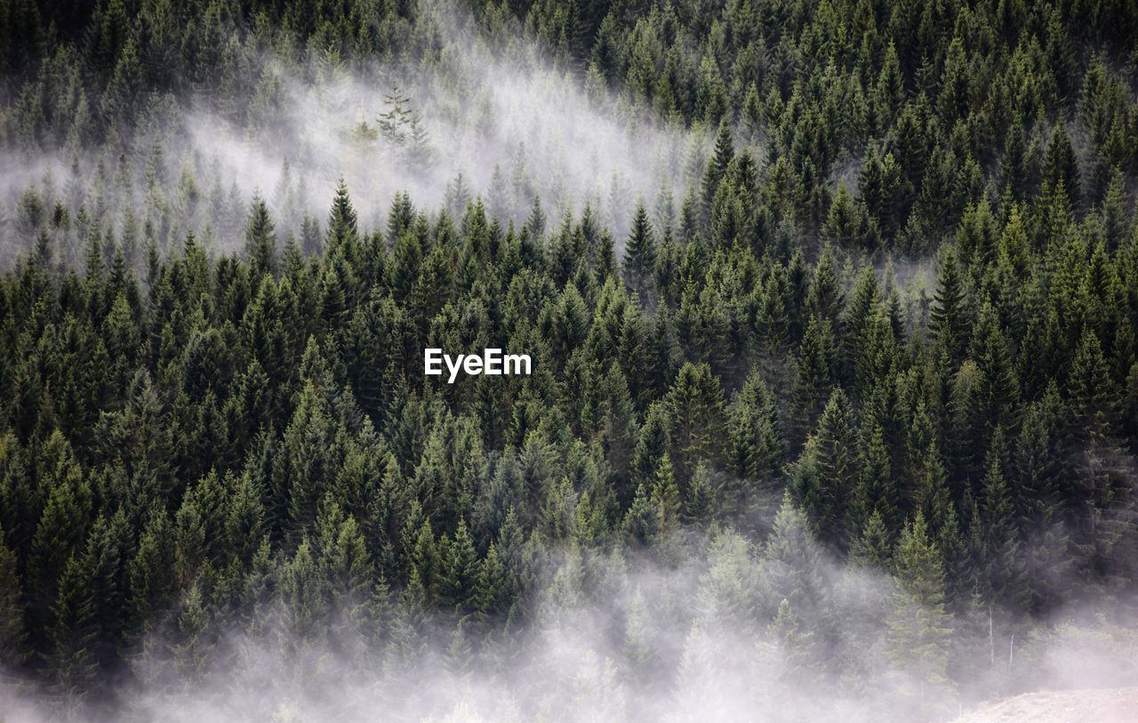High Angle View Of Trees Growing In Forest During Foggy Weather