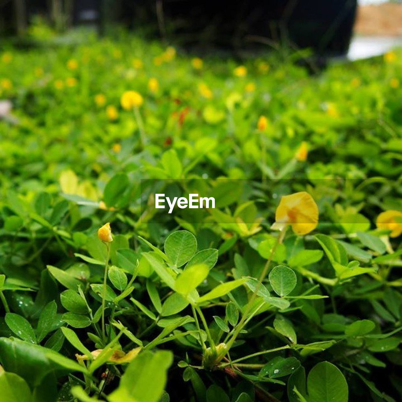 growth, plant, flower, nature, green color, freshness, leaf, outdoors, yellow, beauty in nature, fragility, petal, field, no people, close-up, day, flower head, blooming, horticulture