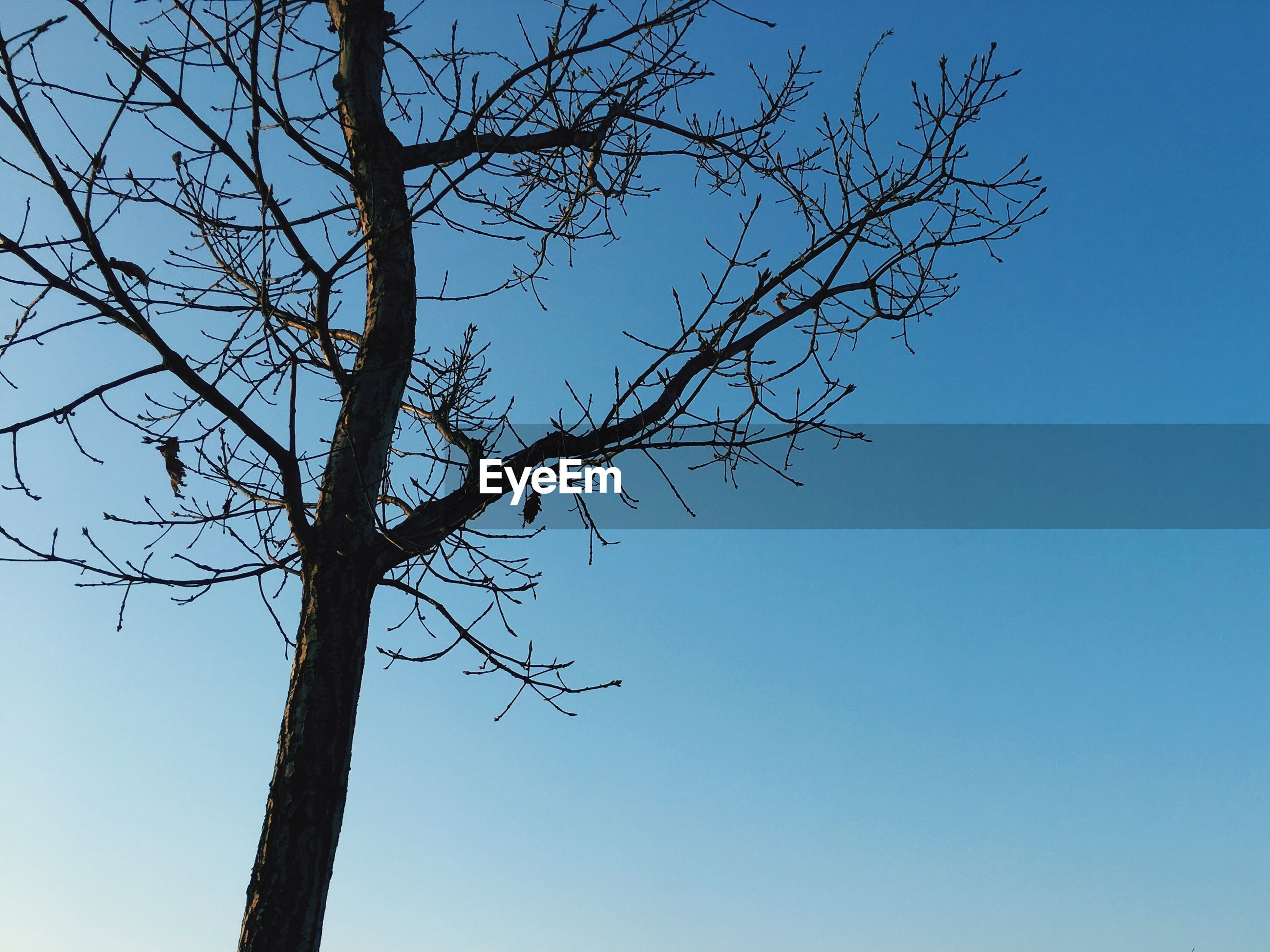 low angle view, tree, clear sky, nature, branch, sky, no people, outdoors, close-up, day, beauty in nature
