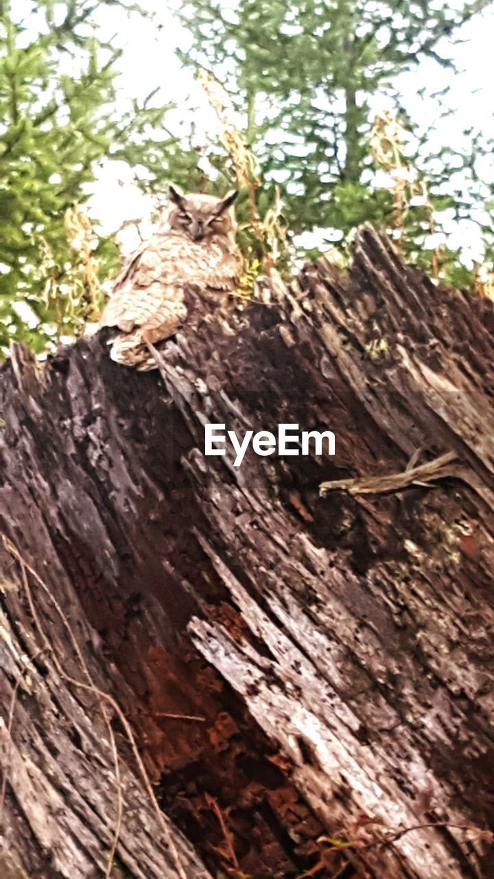 wood - material, tree, tree trunk, low angle view, no people, day, log, outdoors, forest, close-up, nature