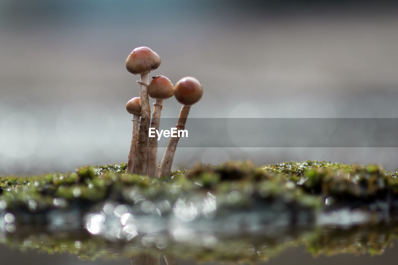 selective focus, food, close-up, no people, nature, growth, plant, freshness, food and drink, beauty in nature, vegetable, water, day, vulnerability, mushroom, green color, outdoors, fragility, focus on foreground