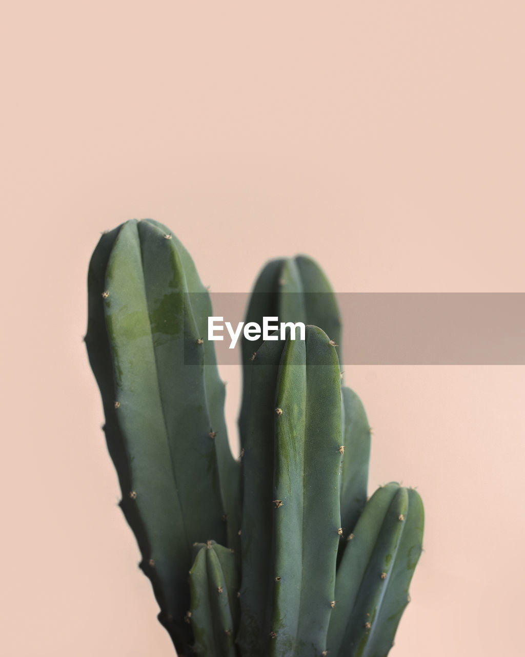 Close-Up Of Cactus Against Colored Background