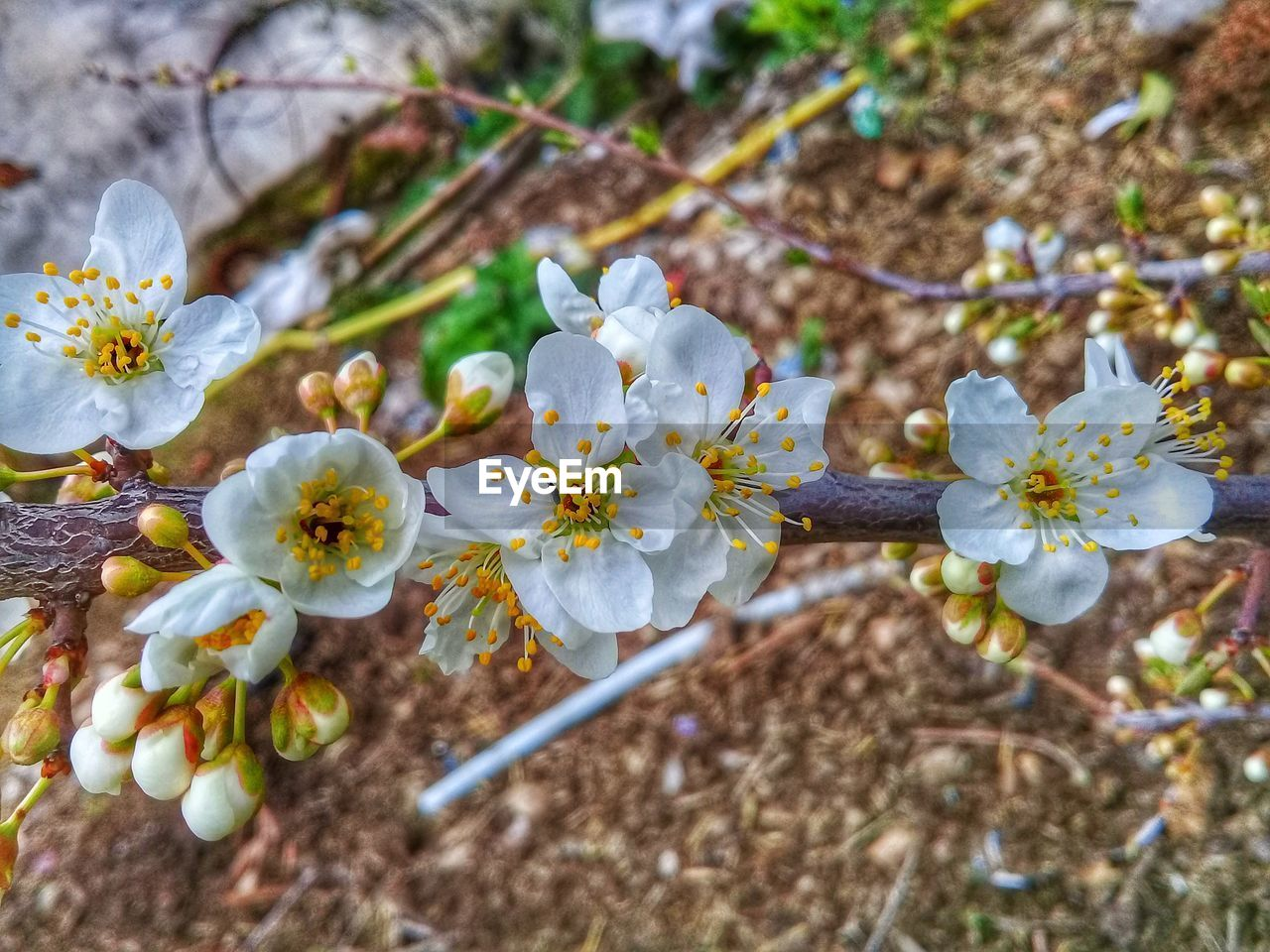 flower, flowering plant, fragility, beauty in nature, vulnerability, growth, plant, freshness, petal, close-up, nature, inflorescence, day, pollen, flower head, springtime, blossom, selective focus, focus on foreground, no people, outdoors, cherry blossom, spring