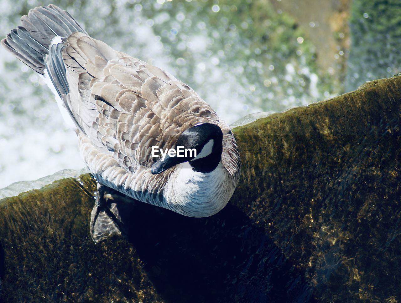Close-up of a bird standing on the edge of a floodgate