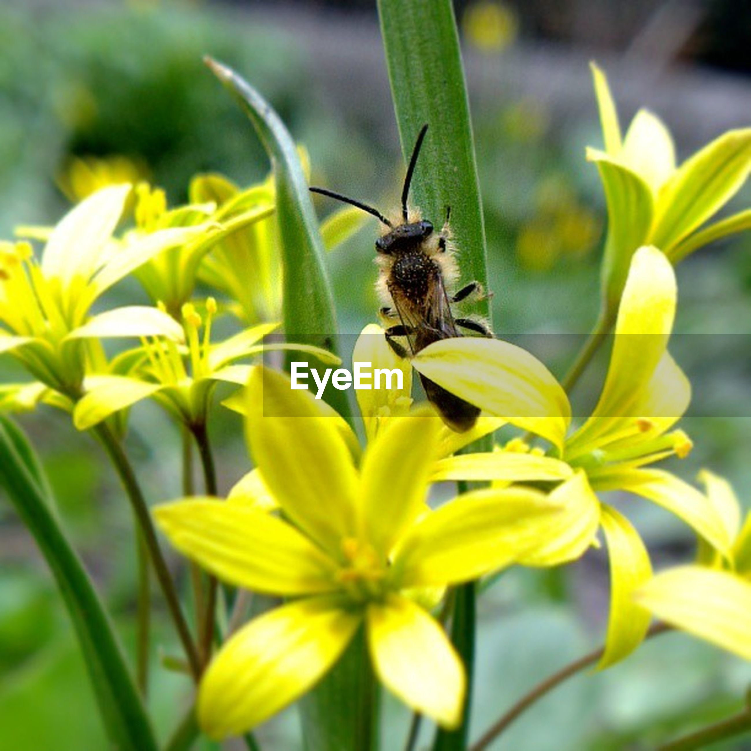 animal themes, flower, one animal, animals in the wild, wildlife, insect, freshness, yellow, petal, pollination, bee, focus on foreground, fragility, growth, beauty in nature, nature, flower head, close-up, symbiotic relationship, plant