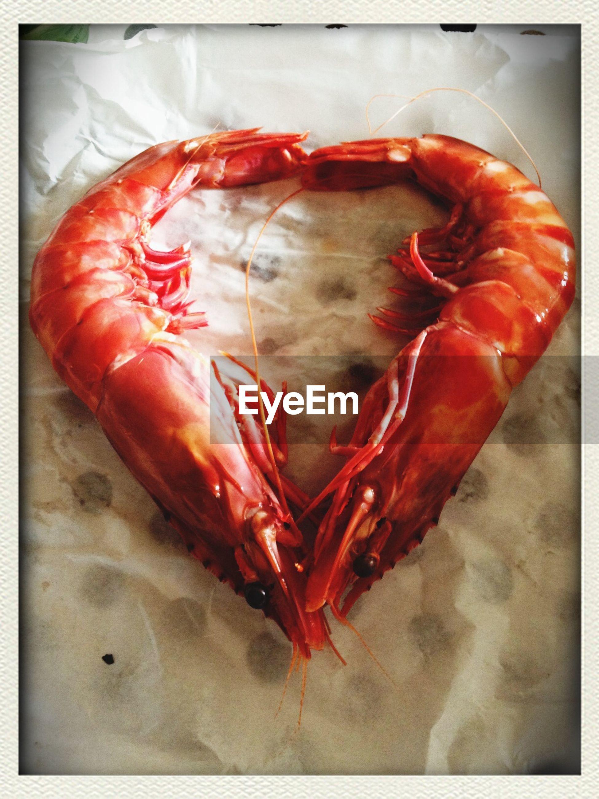 Two shrimps in heart shape