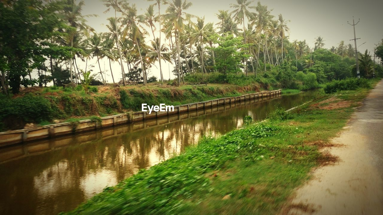 tree, water, reflection, no people, nature, outdoors, growth, river, road, day, scenics, grass, palm tree, beauty in nature, sky