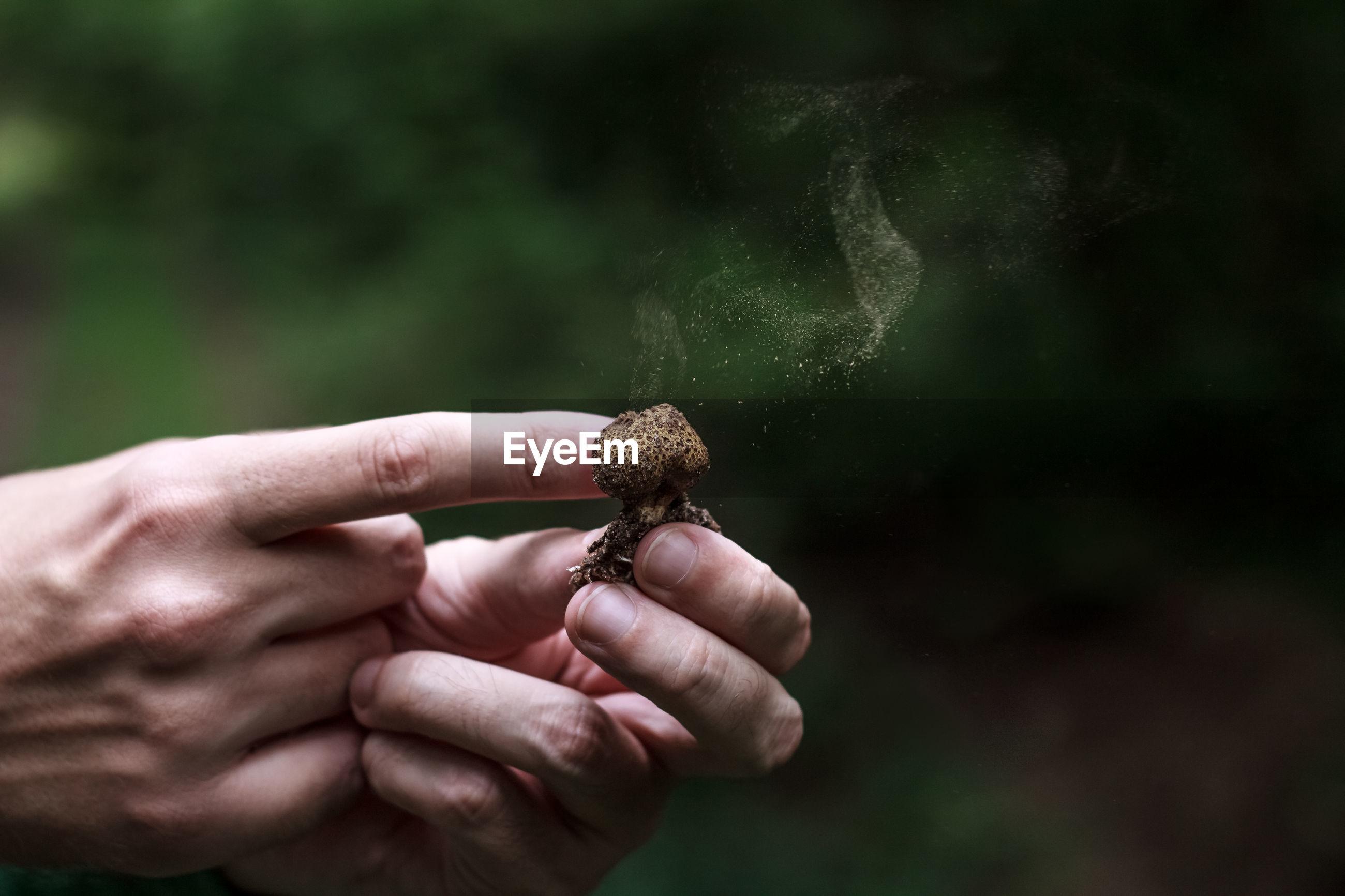 Close-up of hands holding mushroom