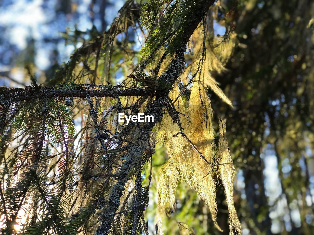 tree, tree trunk, growth, nature, branch, low angle view, day, focus on foreground, no people, beauty in nature, green color, outdoors, sunlight, close-up, forest, catkin