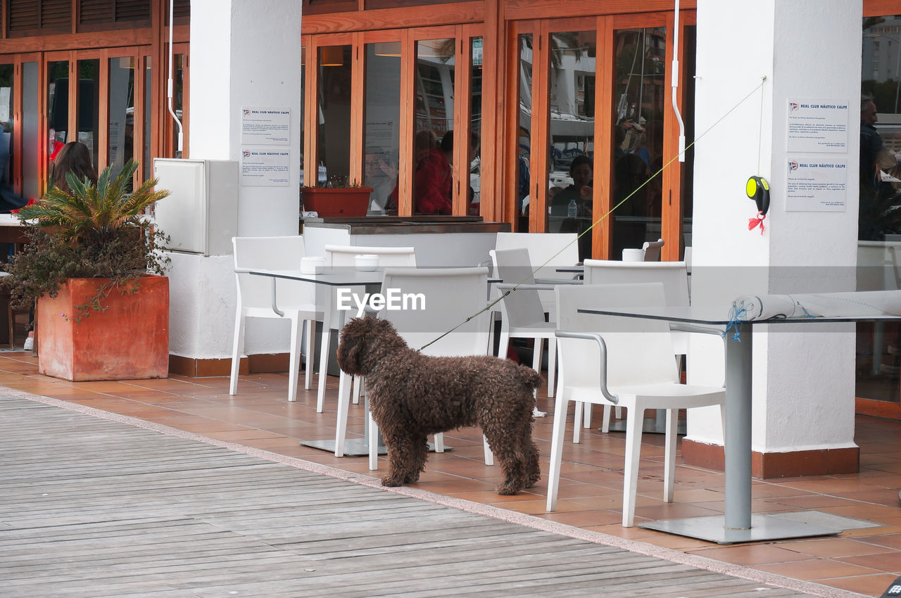 VIEW OF A DOG IN FRONT OF AN ANIMAL