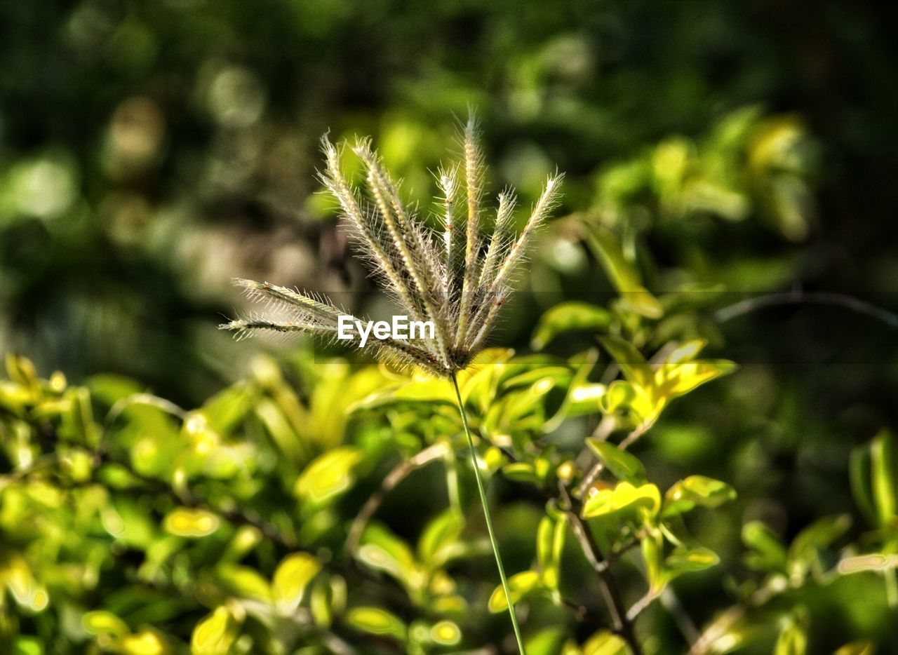 growth, nature, plant, green color, focus on foreground, day, outdoors, no people, leaf, beauty in nature, close-up, fragility, freshness, animal themes