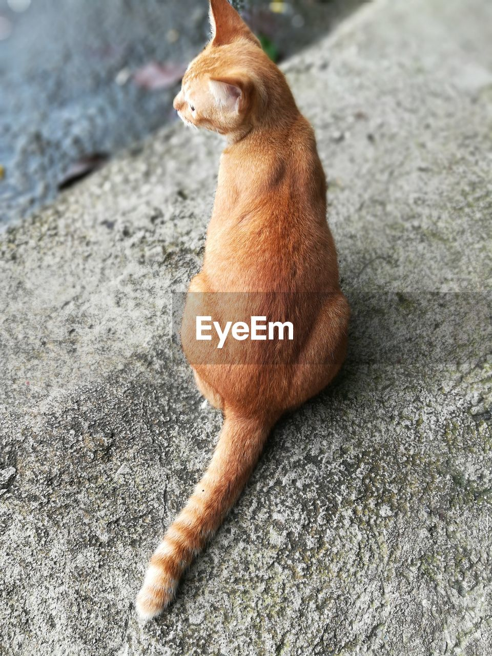 mammal, one animal, domestic, domestic animals, pets, vertebrate, brown, feline, cat, no people, domestic cat, high angle view, day, dog, full length, relaxation, canine, ginger cat, whisker