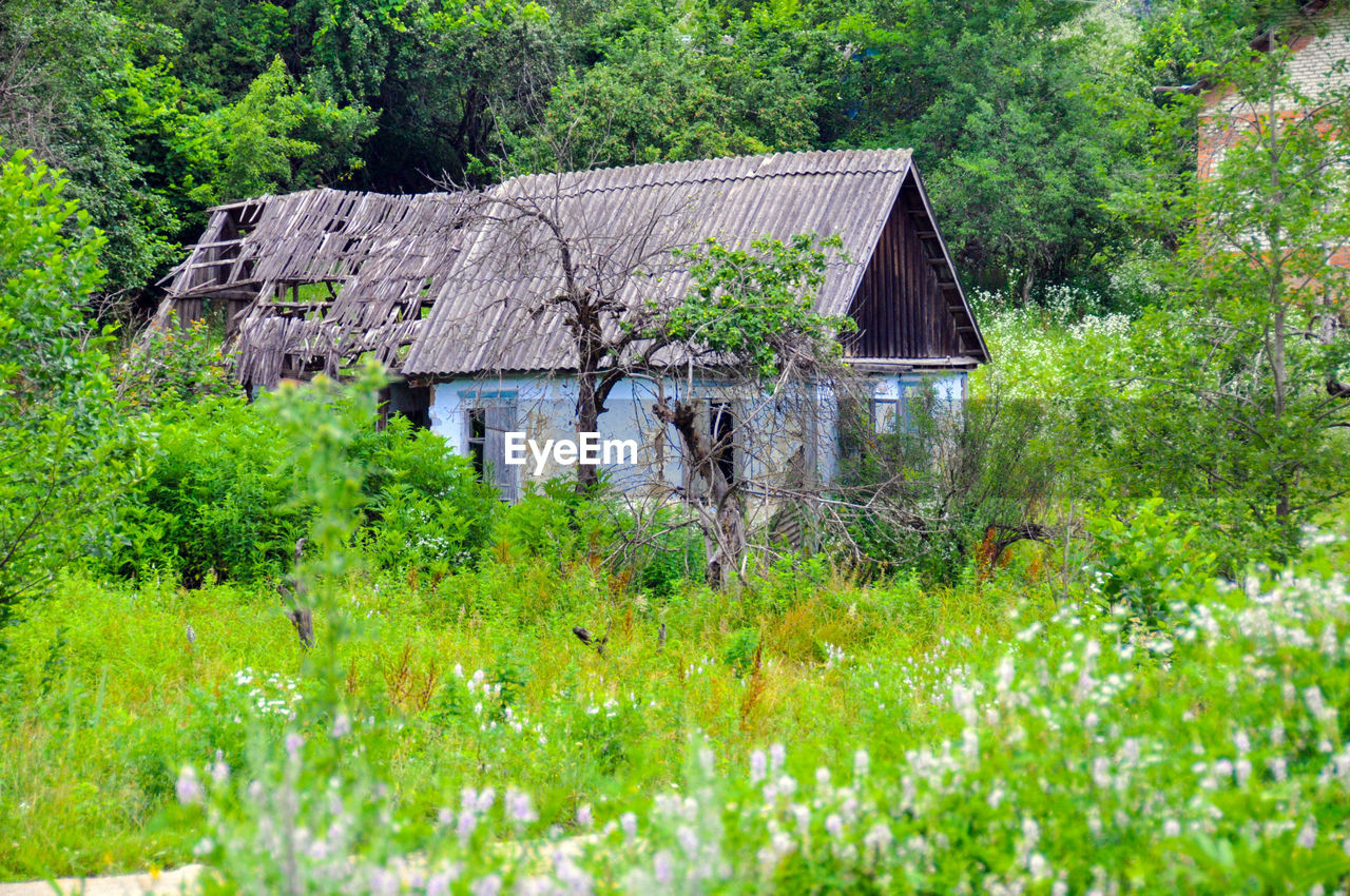 built structure, architecture, building exterior, house, tree, plant, green color, abandoned, no people, day, roof, outdoors, nature, grass