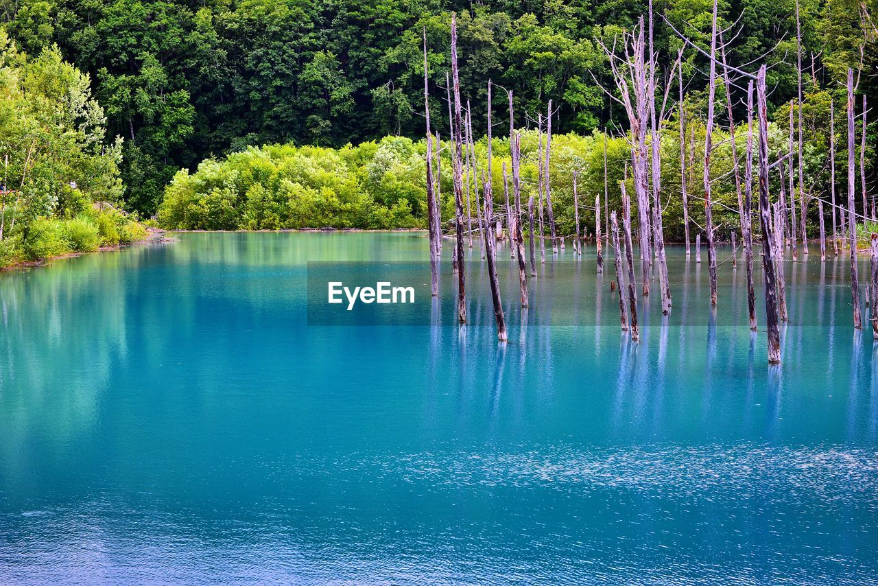 water, tree, plant, reflection, beauty in nature, tranquility, lake, scenics - nature, tranquil scene, waterfront, nature, day, no people, non-urban scene, green color, growth, forest, outdoors, idyllic, turquoise colored
