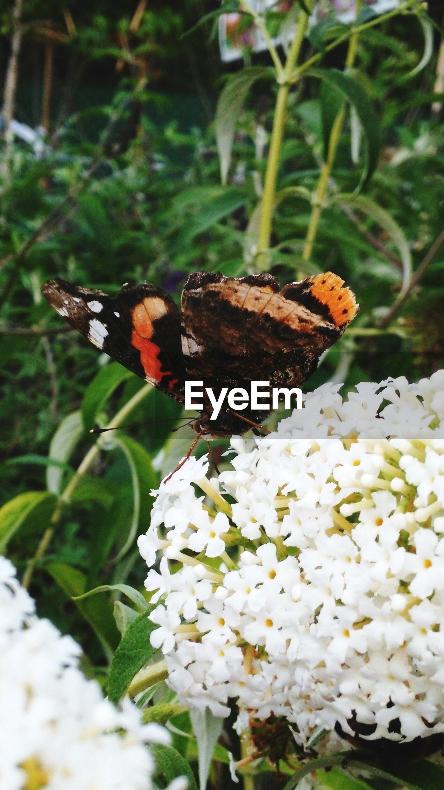 flower, animal themes, insect, freshness, fragility, one animal, nature, animals in the wild, beauty in nature, growth, close-up, focus on foreground, plant, butterfly, wildlife, butterfly - insect, white color, petal, selective focus, day