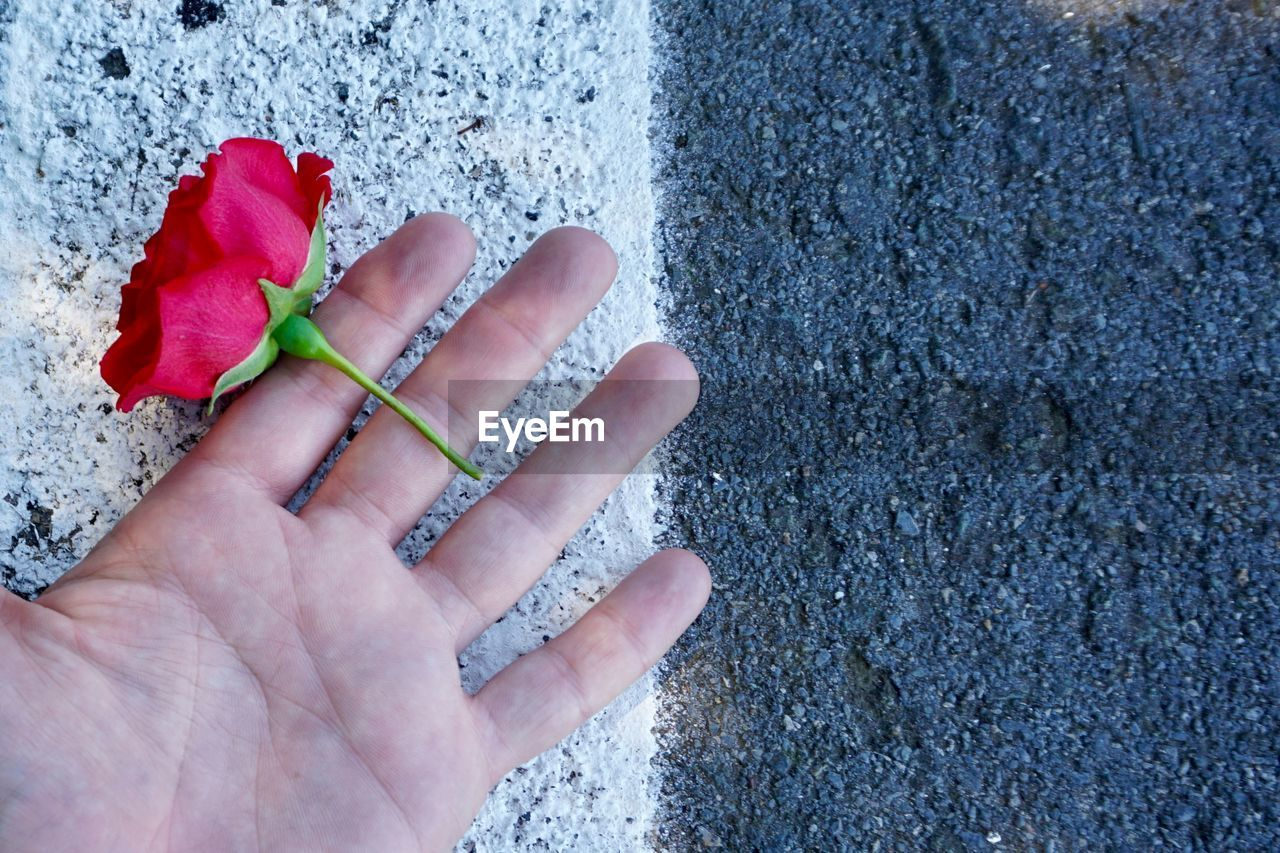 human hand, hand, human body part, holding, body part, one person, real people, flower, red, flowering plant, human finger, plant, personal perspective, finger, day, freshness, beauty in nature, close-up, nature, outdoors, flower head