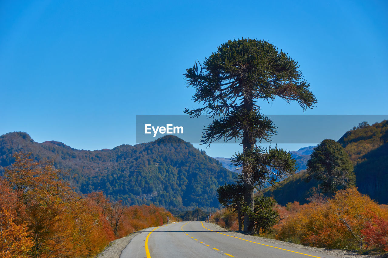 tree, plant, sky, road, transportation, beauty in nature, nature, clear sky, blue, mountain, sign, day, scenics - nature, tranquility, non-urban scene, the way forward, no people, direction, tranquil scene, road marking, outdoors, change, dividing line