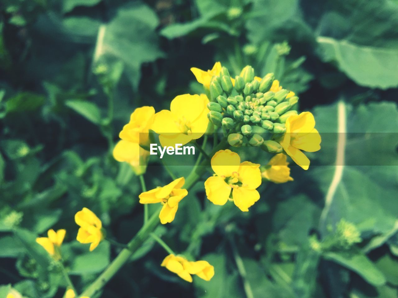 flower, growth, nature, yellow, beauty in nature, plant, fragility, freshness, petal, blooming, outdoors, no people, flower head, day, close-up