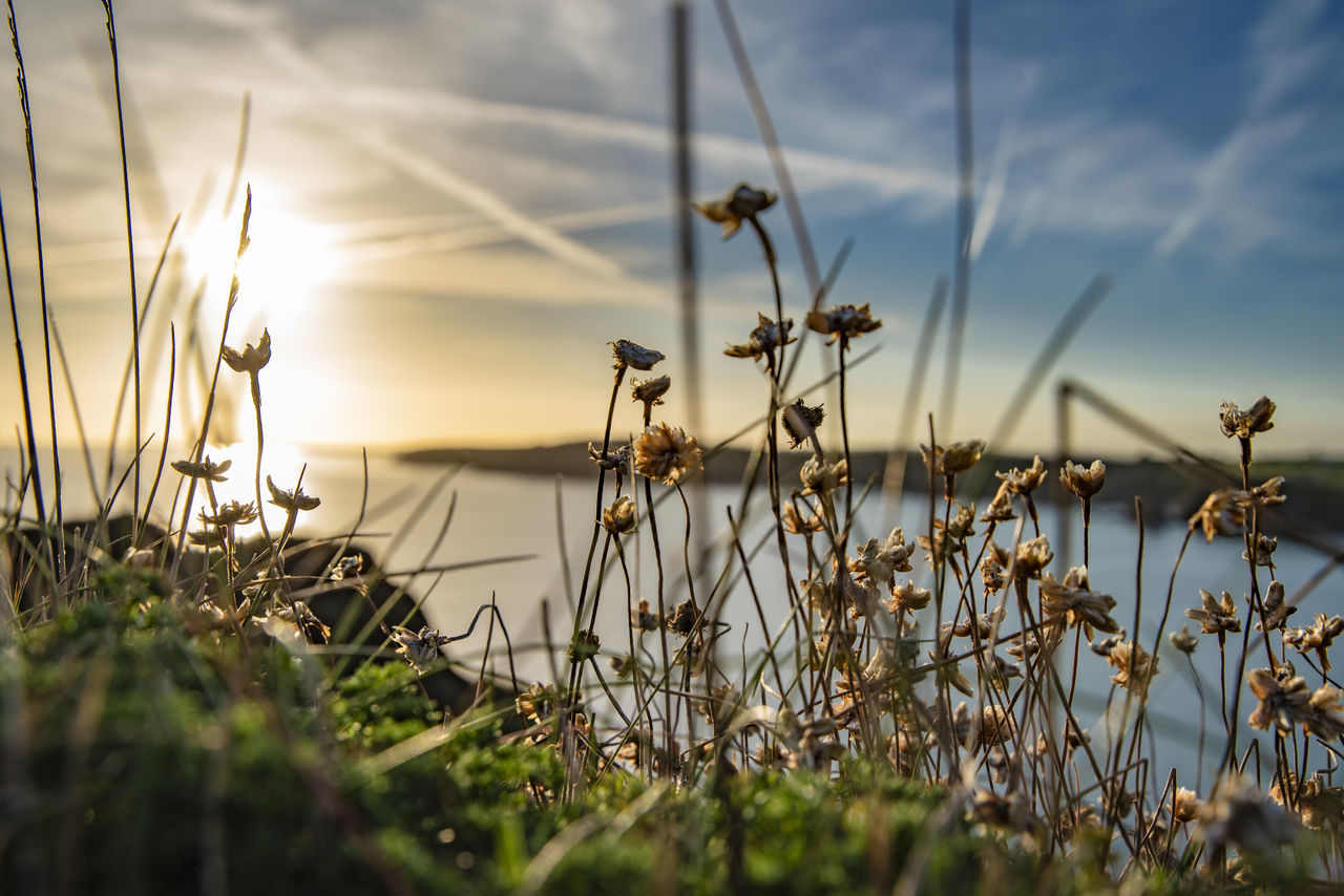 plant, sky, growth, beauty in nature, nature, tranquility, cloud - sky, water, no people, grass, tranquil scene, selective focus, scenics - nature, land, day, flower, sunset, close-up, outdoors