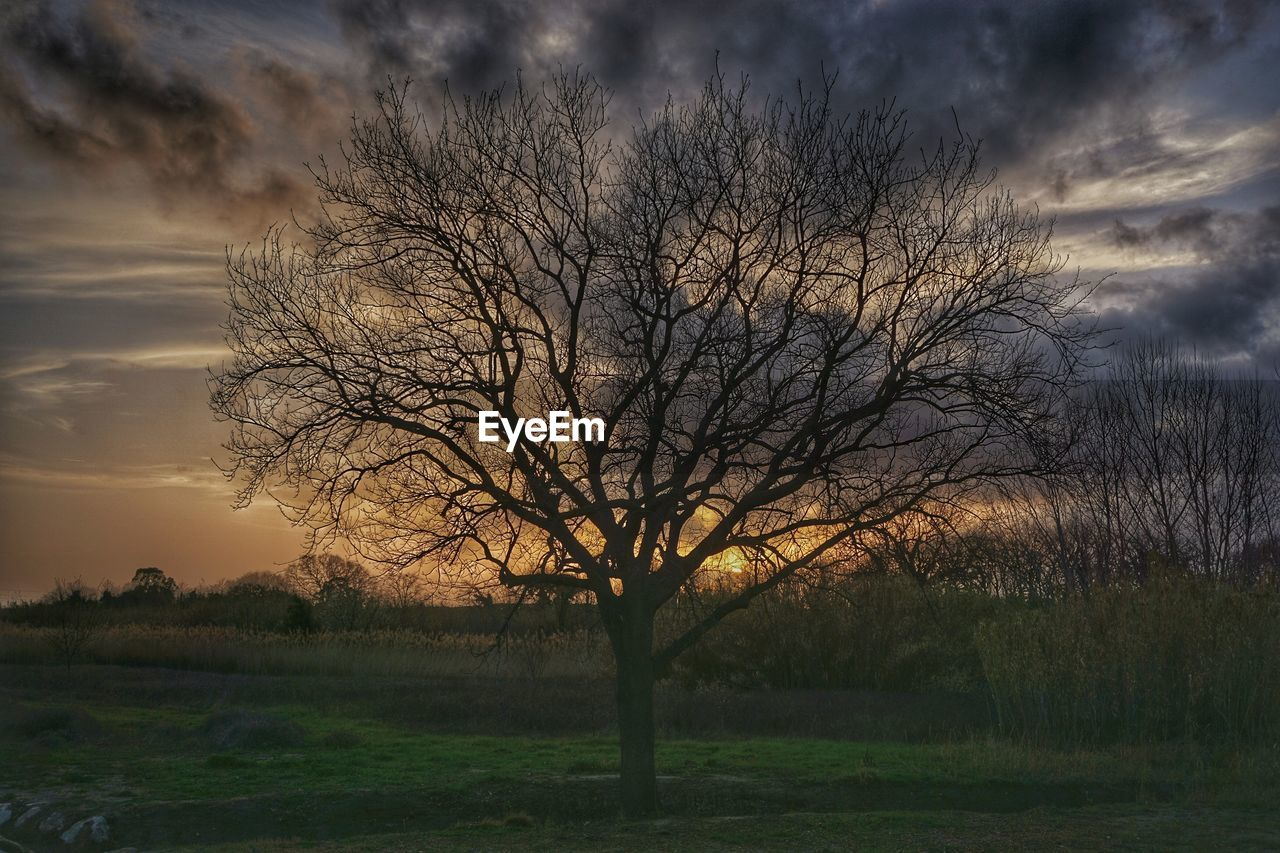 bare tree, tranquility, beauty in nature, nature, tree, scenics, tranquil scene, landscape, field, sunset, sky, outdoors, grass, cloud - sky, no people, silhouette, branch, lone, day, water