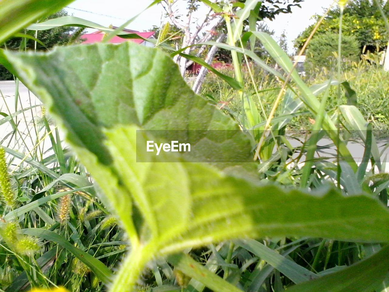growth, plant, leaf, green color, nature, close-up, day, beauty in nature, outdoors, no people, grass, freshness, animal themes