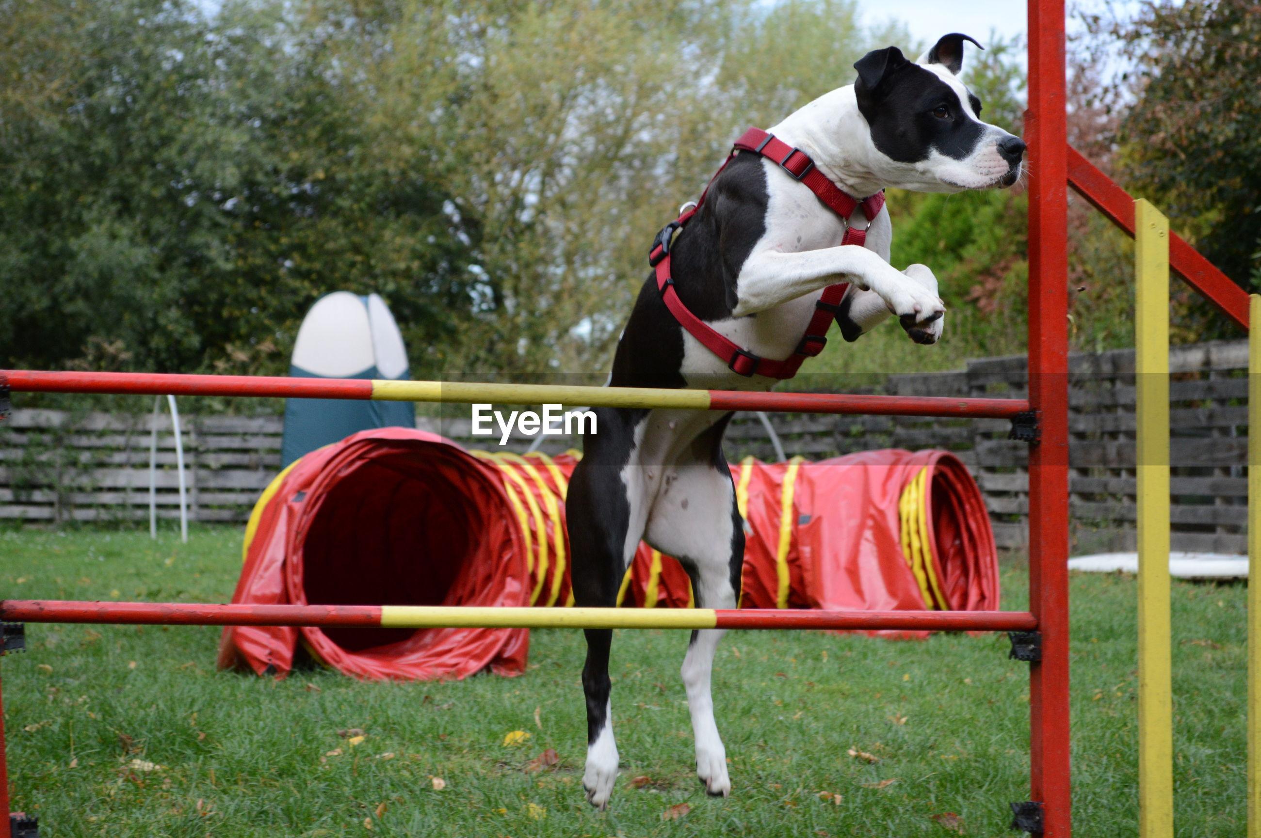 DOG PLAYING ON LANDSCAPE