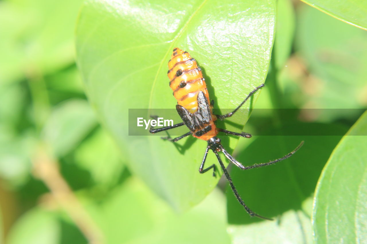 one animal, insect, animals in the wild, animal themes, green color, leaf, animal wildlife, close-up, nature, no people, day, growth, outdoors, beauty in nature