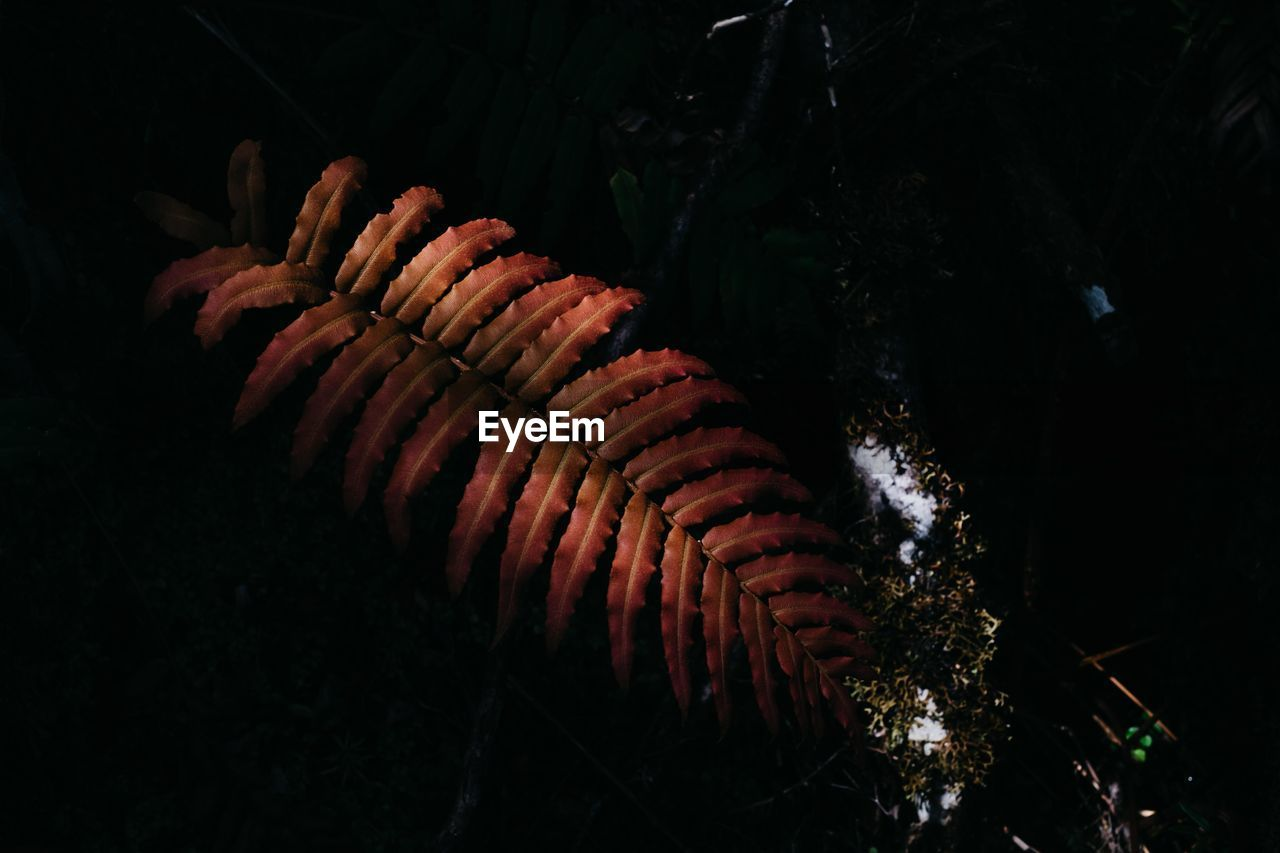 CLOSE-UP OF FERN IN THE FOREST
