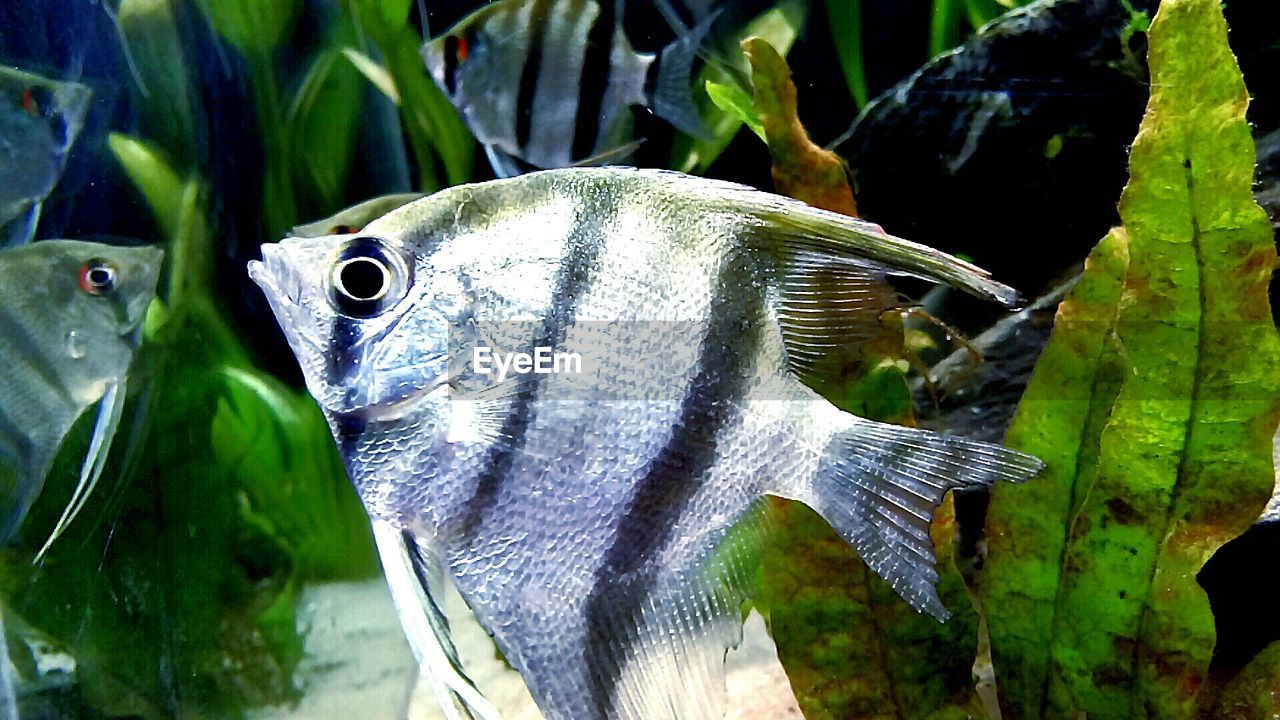 fish, close-up, one animal, leaf, animal themes, no people, day, nature, animals in the wild, green color, outdoors, animal wildlife, beauty in nature, freshness