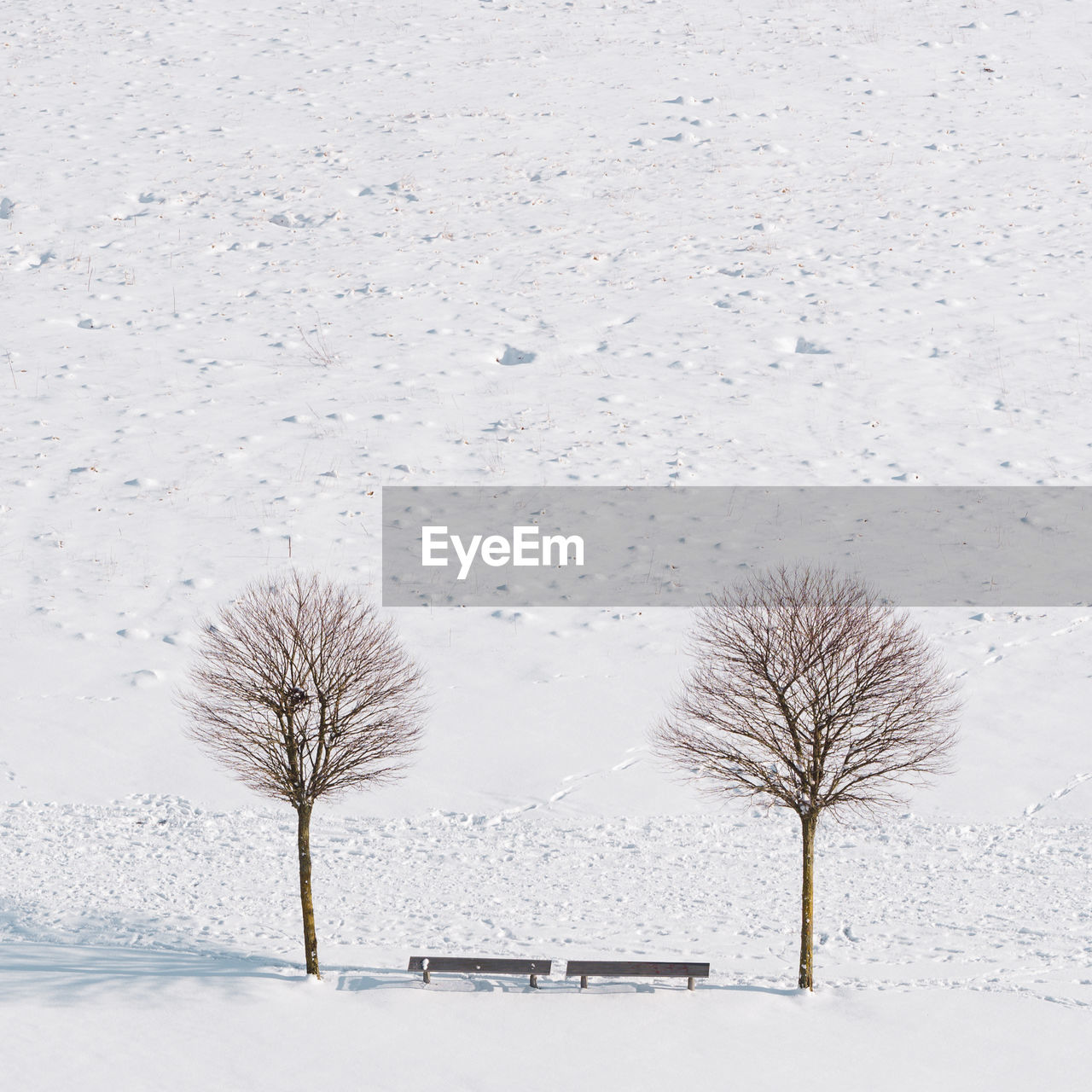 snow, winter, cold temperature, weather, nature, frozen, beauty in nature, bare tree, tranquil scene, tranquility, tree, no people, outdoors, scenics, day, landscape, branch
