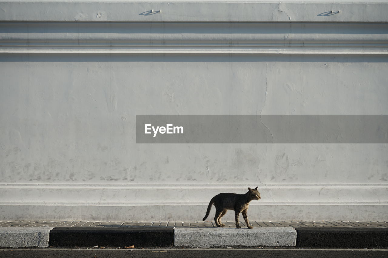 animal, animal themes, one animal, mammal, vertebrate, feline, domestic animals, cat, pets, domestic, no people, wall - building feature, side view, domestic cat, day, looking, architecture, animal wildlife, window, outdoors