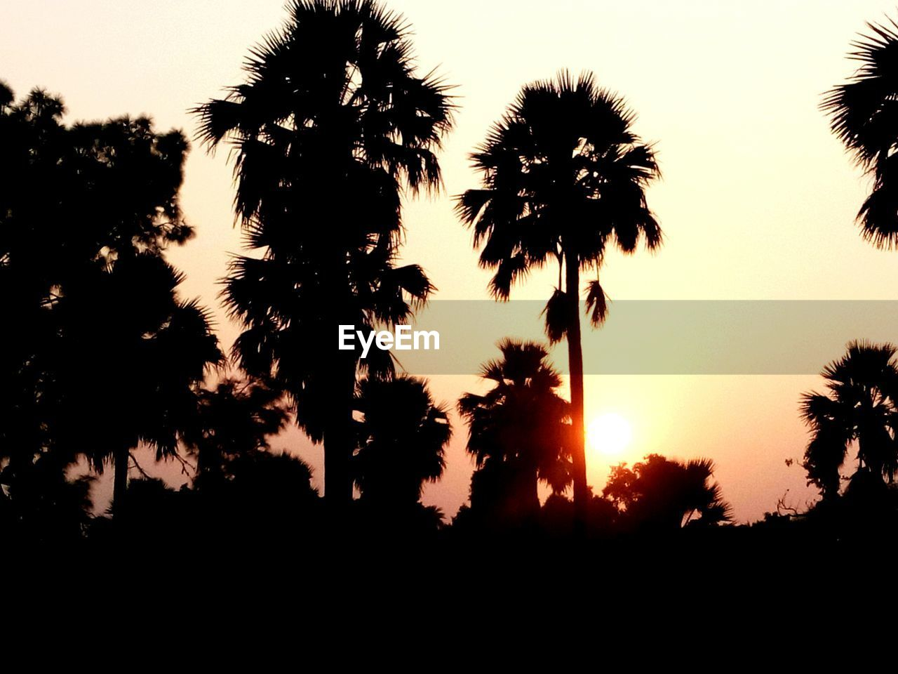 silhouette, sunset, tree, palm tree, tranquility, beauty in nature, tranquil scene, nature, growth, sky, tree trunk, scenics, no people, outdoors, day