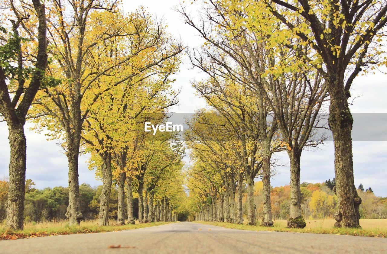 tree, the way forward, road, autumn, day, nature, scenics, transportation, outdoors, tranquility, no people, landscape, beauty in nature, growth, bare tree, clear sky, sky