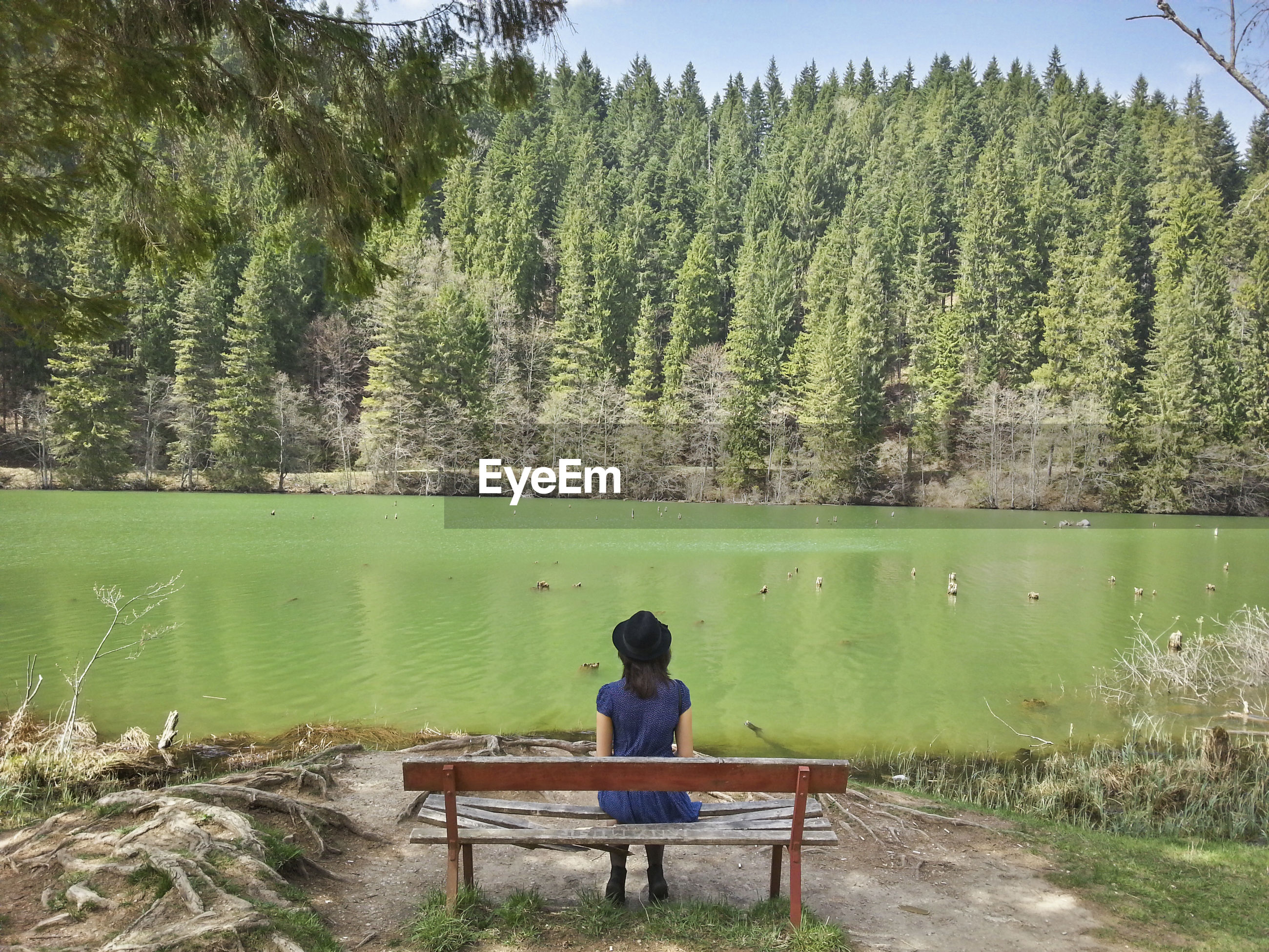 Rear view of woman sitting on bench against river