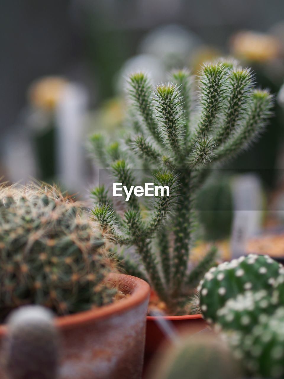 CLOSE-UP OF POTTED CACTUS PLANT
