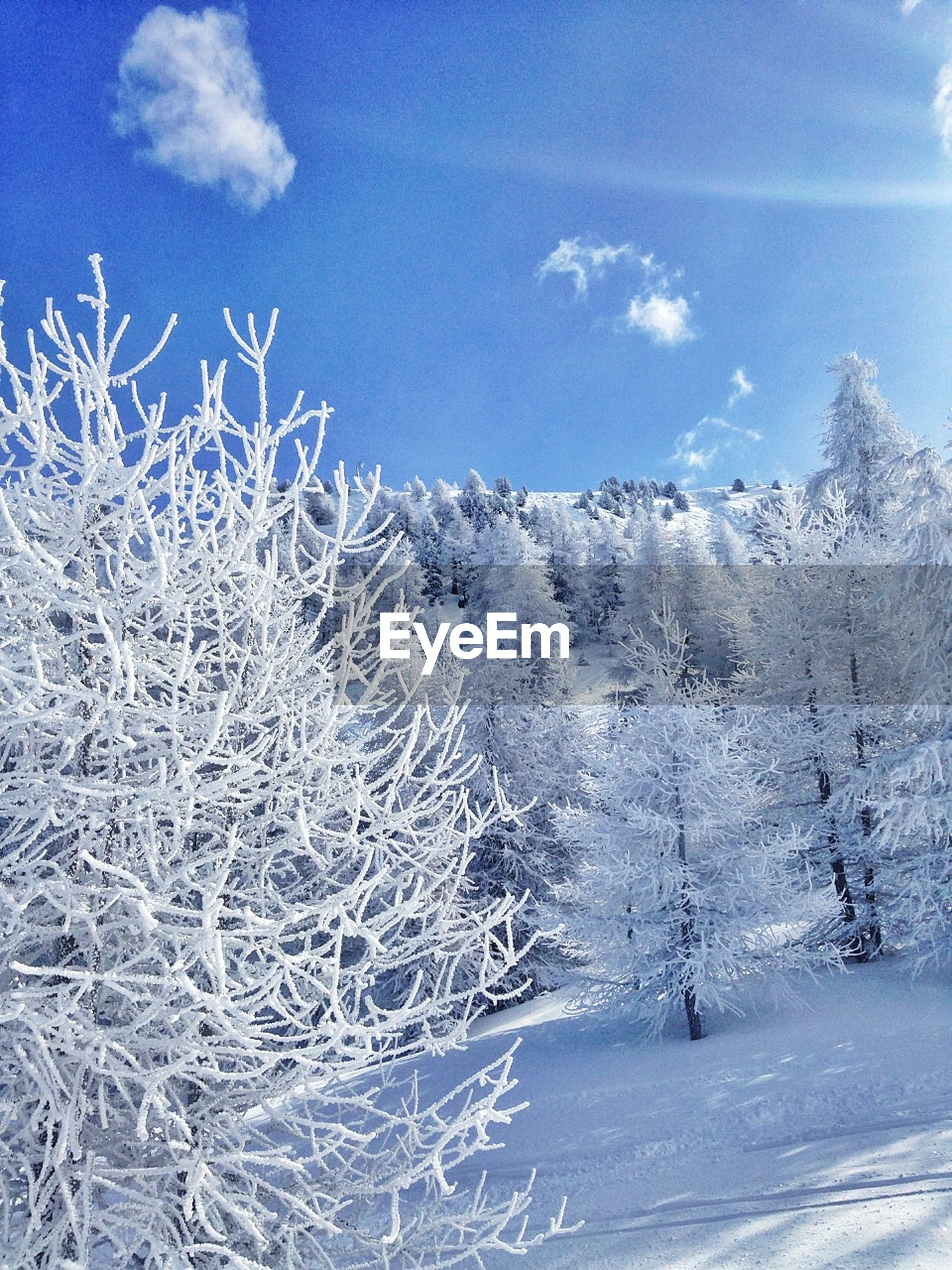 snow, winter, cold temperature, season, weather, covering, white color, sky, tranquility, nature, tranquil scene, frozen, landscape, field, beauty in nature, tree, bare tree, scenics, blue, covered