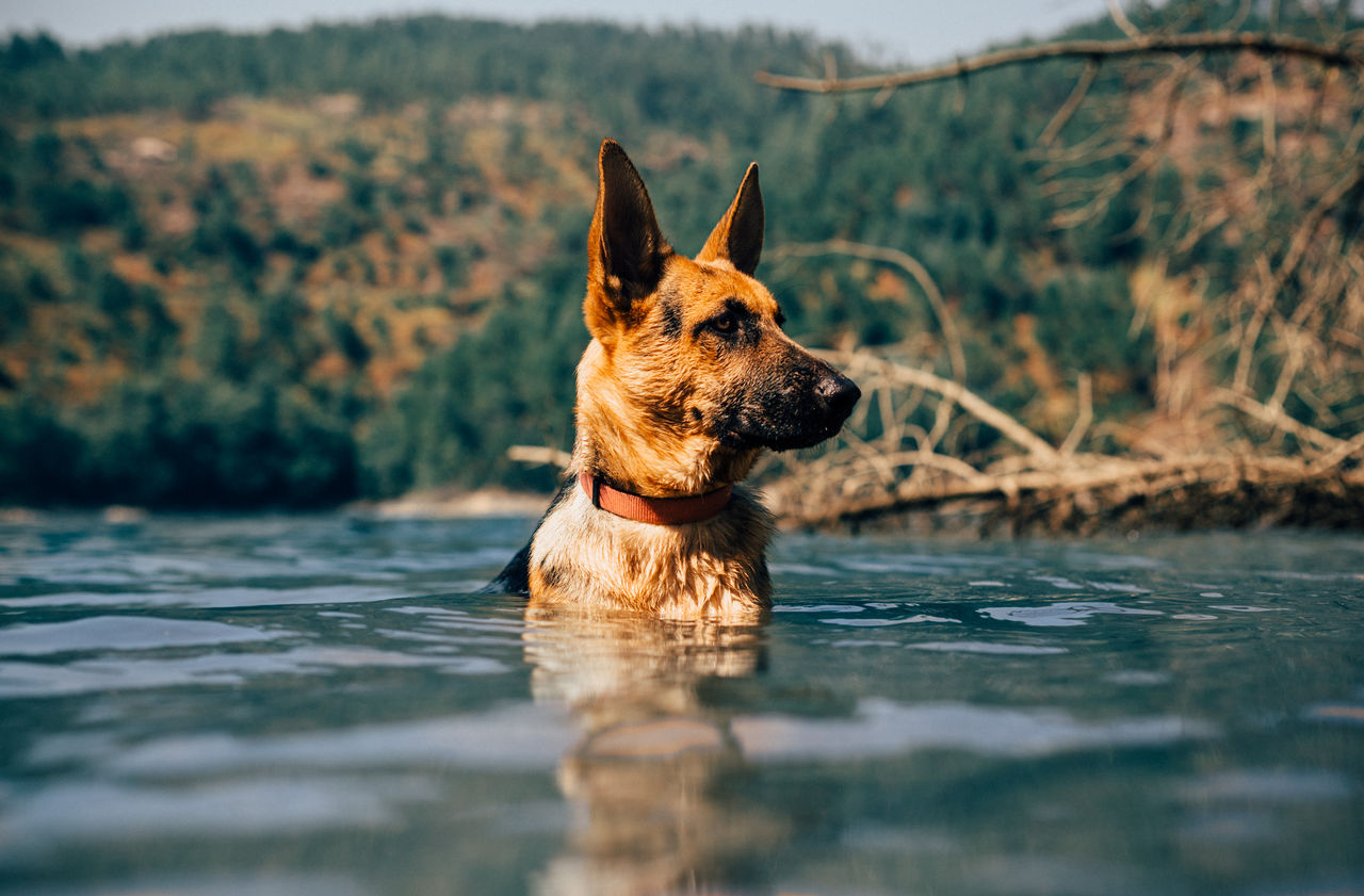 Surface Level View Of Dog Sitting In Lake