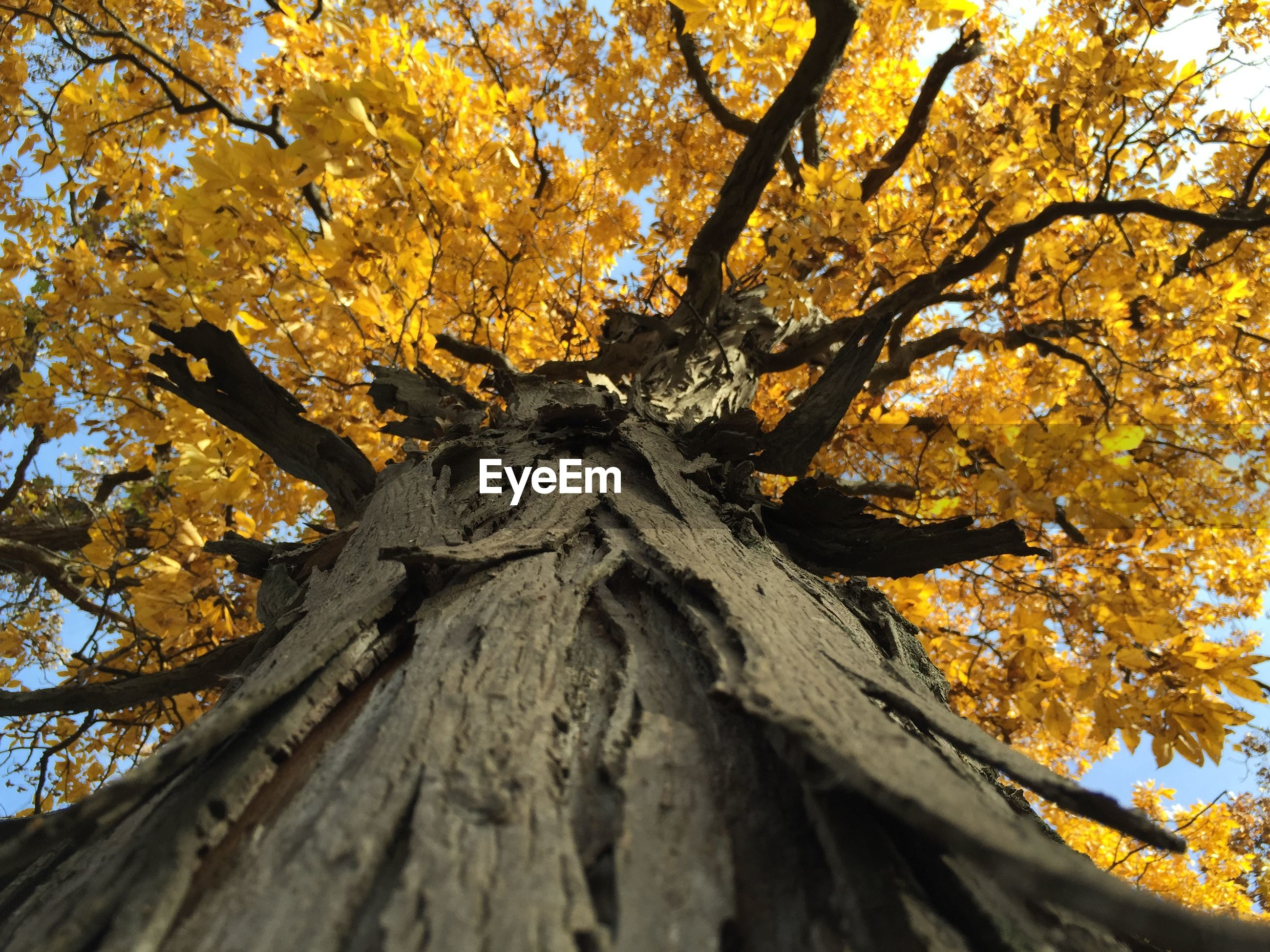 Low angle view of tree growing against sky during autumn