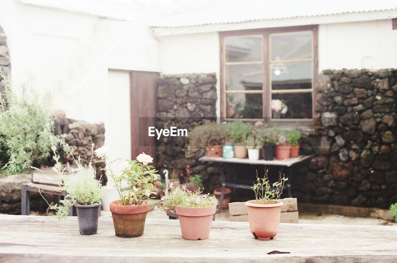 potted plant, plant, growth, architecture, built structure, building exterior, nature, no people, day, outdoors, flower pot, front or back yard, building, window, beauty in nature, house, focus on foreground, succulent plant, cactus, table, houseplant